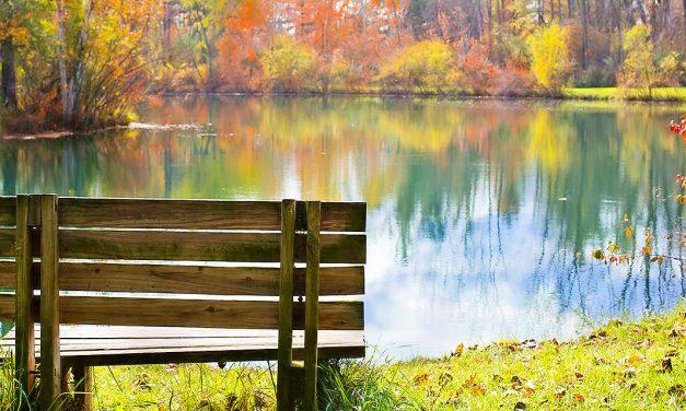 The Park Bench   A Short Story by Natalie Pratt
